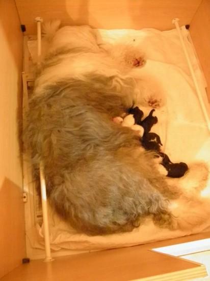 1-Tag-Mamma-Holly-geschafft-nach-der-Geburt