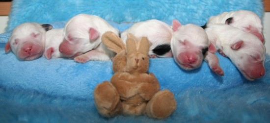 2-days-eastermonday-7-male-Pebbles--heads-