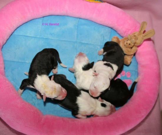 2-days-old-4-girls-Pebbles-