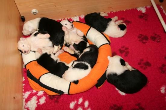 2,5-weeks-crowdy-basket