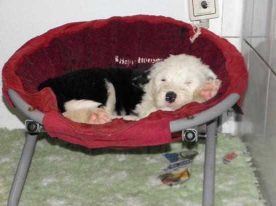 5-weeks-sleeping-in-chair