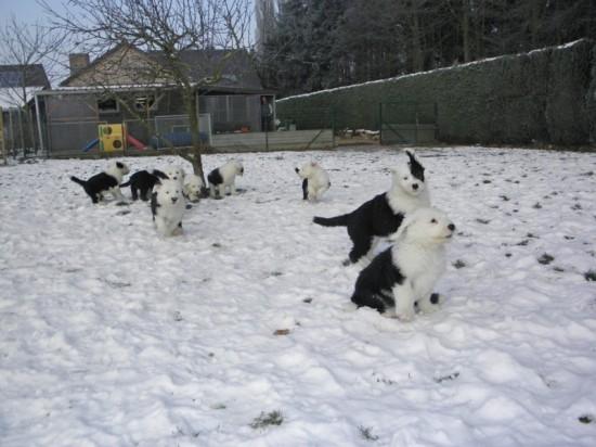 7 Wochen alle in Schnee
