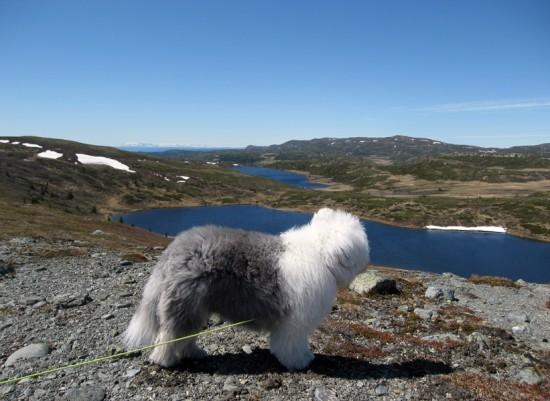 Jette-Joop-Raudalsfjellet.-2011-06-04